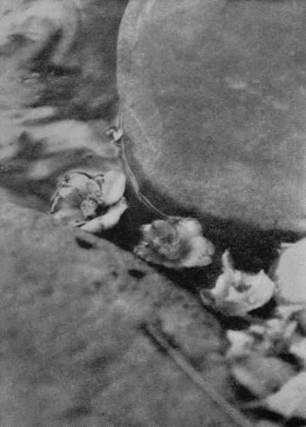 福原信三『光と其諧調』より 1922