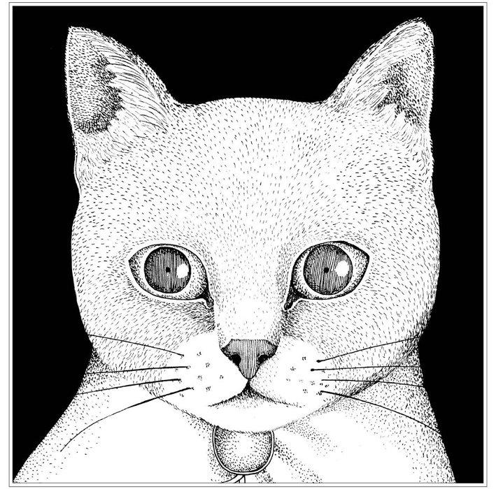 テンテンコ『ALL YOU NEED IS CAT~猫こそはすべて』ジャケット