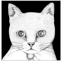 テンテンコ『ALL YOU NEED IS CAT~猫こそはすべて』