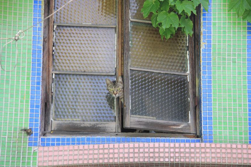 「窓からひょっこり」投稿名:キウイ母