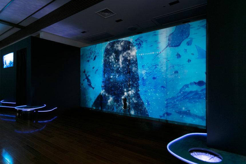 『海の上映会』の模様