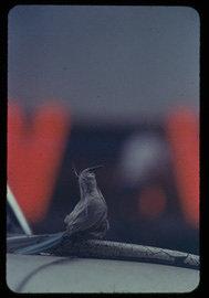 ソール・ライター『無題』撮影年不詳、発色現像方式印画 ©Saul Leiter Foundation