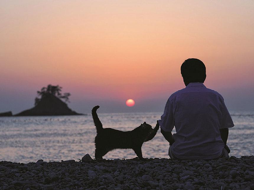 岩合光昭作品 ©Mitsuaki Iwago ©2018「ねことじいちゃん」製作委員会