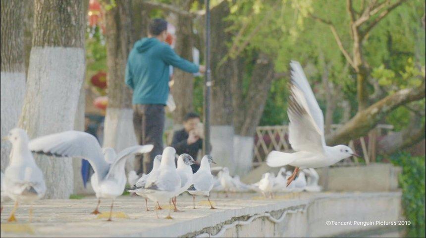 ドキュメント72時間(中国版)『カモメが見える都市公園』