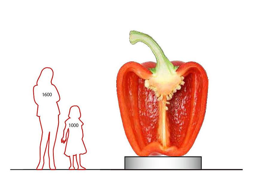 「野菜図面パプリカ」