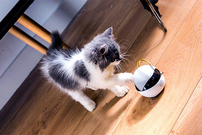 全米で大ヒット中の猫用スマート『ロボEbo(イーボ)』が先行発売