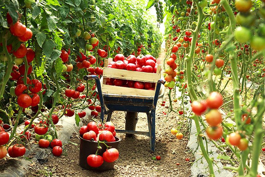 自宅でも畑とつながる『ハタムスビ』×『スマート体験農園システム』