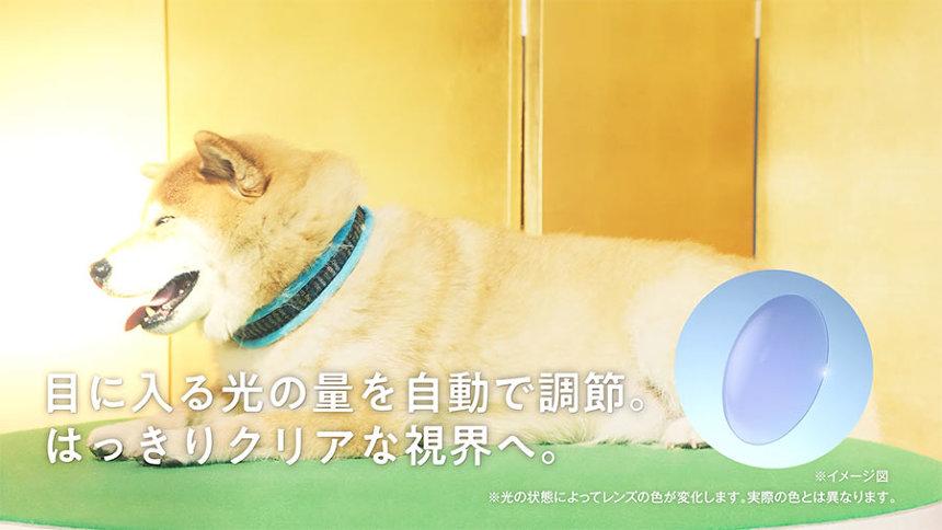 「アキュビュー(R) スマート調光TM」新テレビCM「柴犬まる」篇より