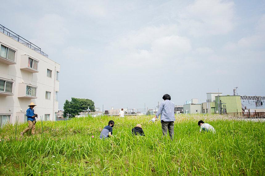 『屋上菜園』イメージビジュアル ©Koichi Wakui