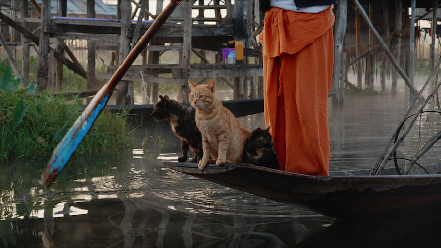 『劇場版 岩合光昭の世界ネコ歩き あるがままに、水と大地のネコ家族』 ©「劇場版 岩合光昭の世界ネコ歩き 2」製作委員会 ©Mitsuaki Iwago