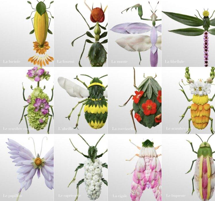 Insect Garden ビジュアル