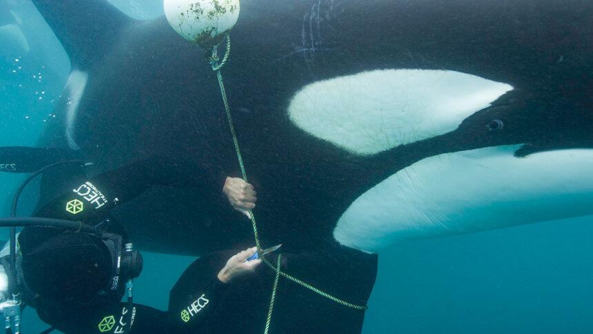 『クジラと海洋生物たちの社会』 ©2021 NGC Network US, LLC. All rights reserved.
