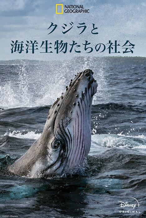 『クジラと海洋生物たちの社会』ポスタービジュアル ©2021 NGC Network US, LLC. All rights reserved.