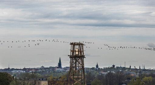 Tadashi Kawamata, Vallisaari Lighthouse, 2021 © Maija Toivanen/ HAM/ Helsinki Biennial 2021