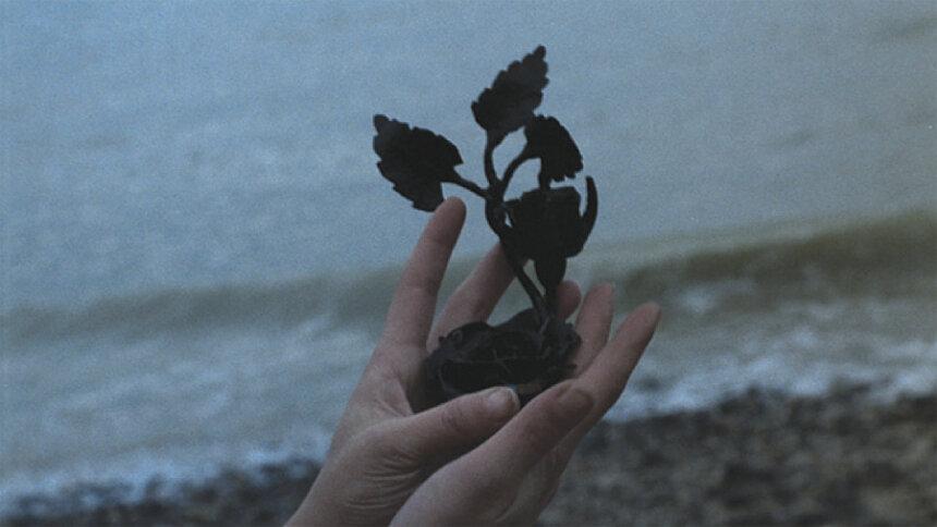 『鉄の薔薇』