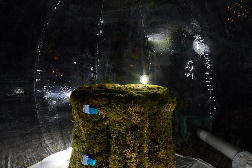 田中浩也研究室+METACITY『Bio Sculpture』