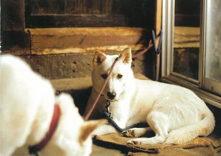 『うめめ』より 2002年 ©KAYO UME