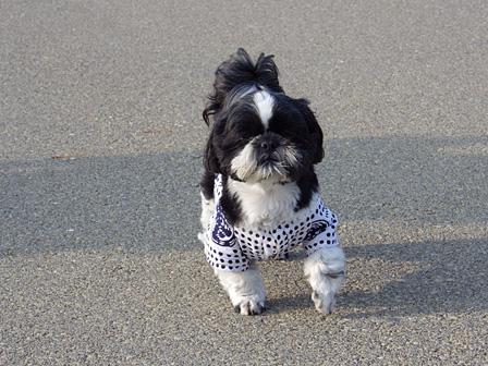 「魚河岸シャツ」は地元の老若男女(および犬)に人気。市役所でも愛用される