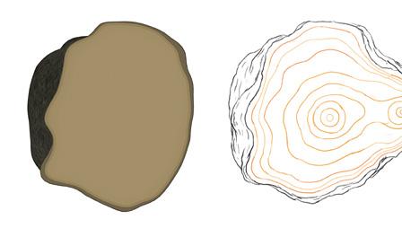 左:ハートランドのロゴマークをもとにCGで作られた木の断面、右:CGに手描きで動きと年輪を加えたスケッチ